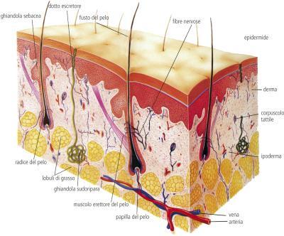 Il pigmentary nota a gravidanza e un sesso del bambino su